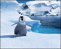 A review of Happy Feet, the wildly successful musical-penguin eco