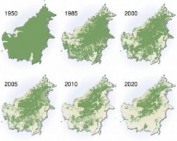 Borneo - Deforestation and endangered species | Ecological Problems