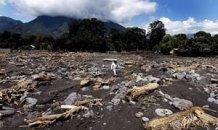 Deforestation in Guatemala | International Development Journalism