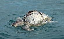 Environmental impact of fishing - Wikipedia