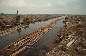 Environmental issues in Indonesia - Wikipedia