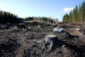 Taiga Biome: Environmental Issues & Threats | Study.com