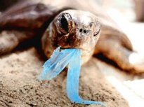 The Impact of Plastic Bags on the Environment / Green Home Library