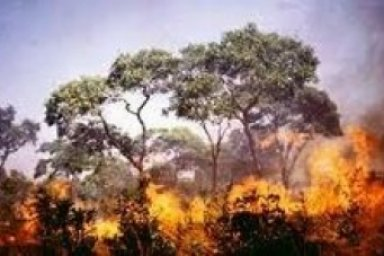 African Savanna Environmental Issues