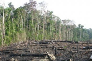 Brazil Environmental Issues