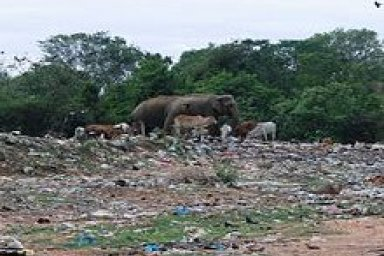 Environmental Issues in Sri Lanka