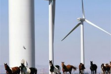 Wind Turbine Environmental Issues
